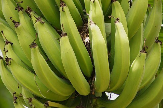 Mit tartalmaz a banán